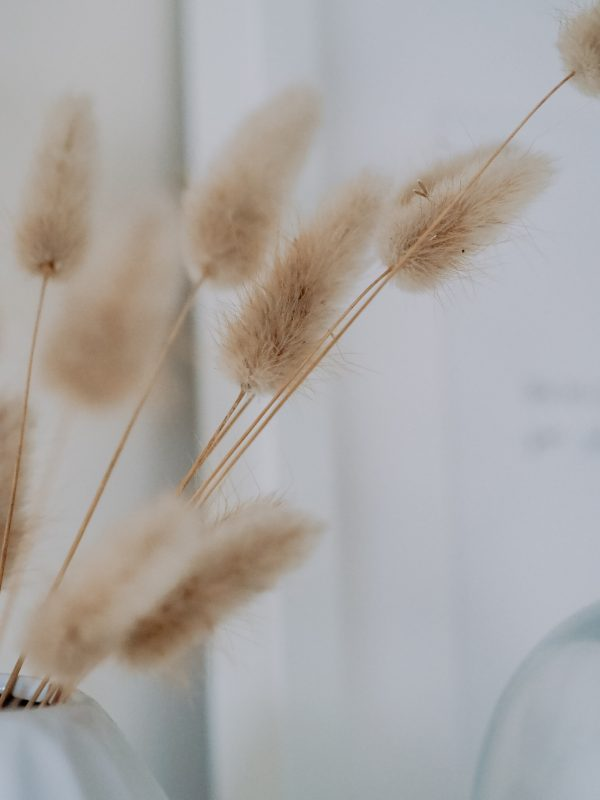 Natural dried lagurus bunny tails bunch by Flourish and Grace